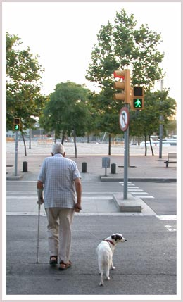 An image of a man walking with dog crossing the street