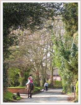 An image of a rider and horse going along a tree sided lane